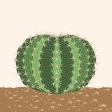 Большой круглый изолированный кактус Стоковые Фото