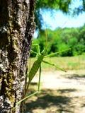 большой кузнечика зеленый Стоковые Изображения RF