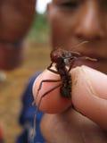 Большой муравей между пальцами Стоковая Фотография