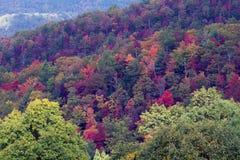 Большой национальный парк закоптелых гор Стоковое Изображение RF