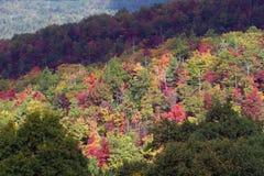 Большой национальный парк закоптелых гор Стоковое Изображение