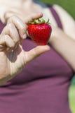 Большой образец клубники (63 граммов) между пальцами женщины Стоковая Фотография RF