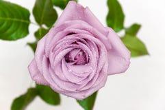 Большой определите розовую на белой предпосылке Стоковое Фото