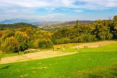Большой осенний сельский район в горах Стоковое фото RF