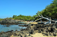большой остров Гавайских островов Стоковое Изображение RF