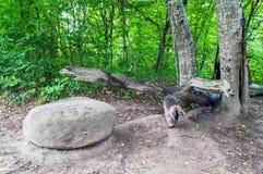 Большой одичалый естественный серый камень и сломленный ствол дерева Стоковые Фотографии RF