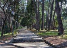 Большой парк городка. Город Tivat, Черногория Стоковые Фото