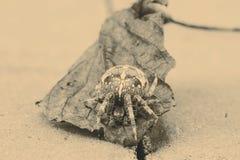 Большой паук шара на лист Стоковое фото RF