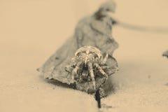 Большой паук шара на лист Стоковая Фотография