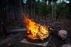 Большой пламенеющий лагерный костер в лесе Стоковые Изображения RF