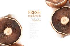 Большой плоский гриб Стоковые Изображения