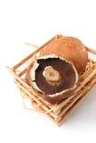 Большой плоский гриб Стоковая Фотография RF