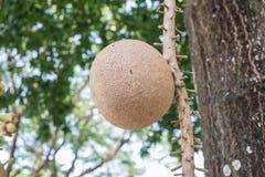 Большой плодоовощ на зеленом цвете Стоковые Фото