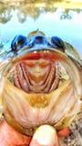 большой рот Стоковое Изображение