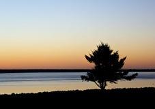 Большой силуэт дерева пляжа на заходе солнца стоковые изображения rf