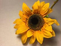 большой солнцецвет Стоковое Фото