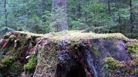 Большой слайдер пня дерева видеоматериал