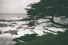 Большой туман дуба Sur прибрежный стоковое изображение