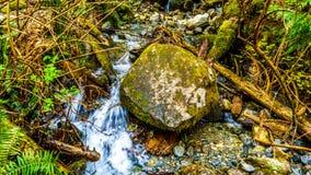Большой утес в заводи в воздержательном дождевом лесе парка озера Rolley захолустного Стоковые Фотографии RF
