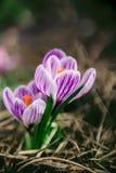 Большой цветок Стоковая Фотография RF