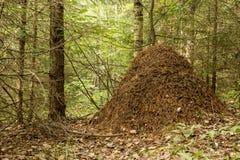 Большой anthill около дерева в древесинах стоковое изображение