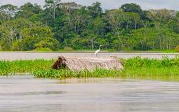 Большой Egret на погруженной в воду покрыванной соломой хате Стоковые Фото