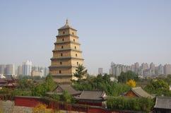 большой pagoda гусыни одичалый Стоковое фото RF