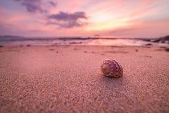 Большой seashell на песке на пляже в back-light sunse Стоковые Фотографии RF