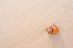 Большой seashell на песке на пляже Стоковая Фотография