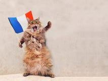Большой shaggy кот очень смешное положение Франция, флаг 5 Стоковые Фотографии RF