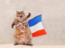 Большой shaggy кот очень смешное положение Франция, флаг 7 Стоковое Изображение RF