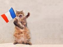 Большой shaggy кот очень смешное положение Франция, флаг 8 Стоковые Фото