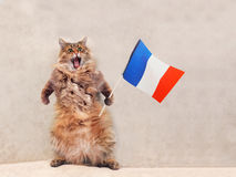 Большой shaggy кот очень смешное положение Франция, флаг 2 Стоковое Изображение
