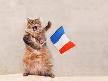 Большой shaggy кот очень смешное положение Франция, флаг 9 Стоковое Изображение RF