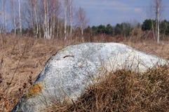 Больдэр в поле весной Стоковое Фото