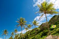 Бразилия выровняла пальму вверх Стоковое Фото