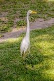 Бразильские птицы outdoors стоковое изображение