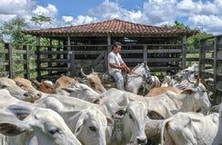 Бразильский ковбой фермы Стоковые Изображения