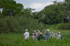 Бразильянин Pantanal - ягуар стоковое изображение