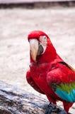 Бразильские птицы стоковое изображение