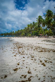 Бразильский Пляж-пляж Carneiros, Pernambuco Стоковое Фото
