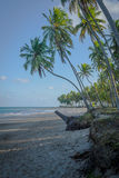Бразильский Пляж-пляж Carneiros, Pernambuco Стоковая Фотография
