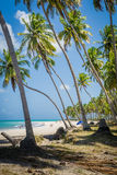 Бразильский Пляж-пляж Carneiros, Pernambuco Стоковое Изображение RF