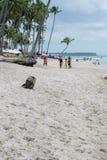 Бразильский Пляж-пляж Carneiros, Pernambuco Стоковое Изображение