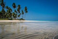 Бразильский Пляж-пляж Carneiros, Pernambuco Стоковое фото RF