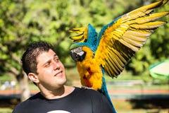 Бразильский человек с его арой любимчика Стоковая Фотография
