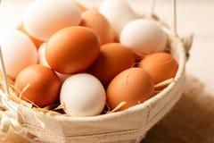 Брайн и белые яичка цыпленка Стоковая Фотография RF