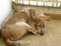 Брайн и белый спать бездомной собаки цвета Стоковые Изображения