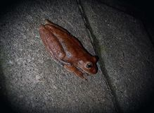 Брайн и маленькая лягушка стоковая фотография rf