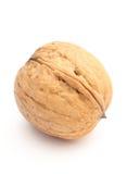 Брайн и свежий грецкий орех на белой предпосылке Стоковое Фото